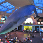 Top Museums in New York City