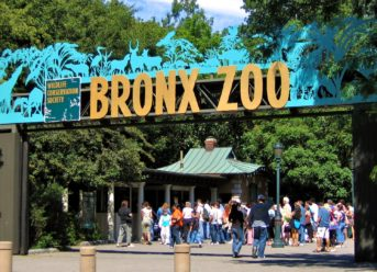 Major attractions at the Bronx Zoo